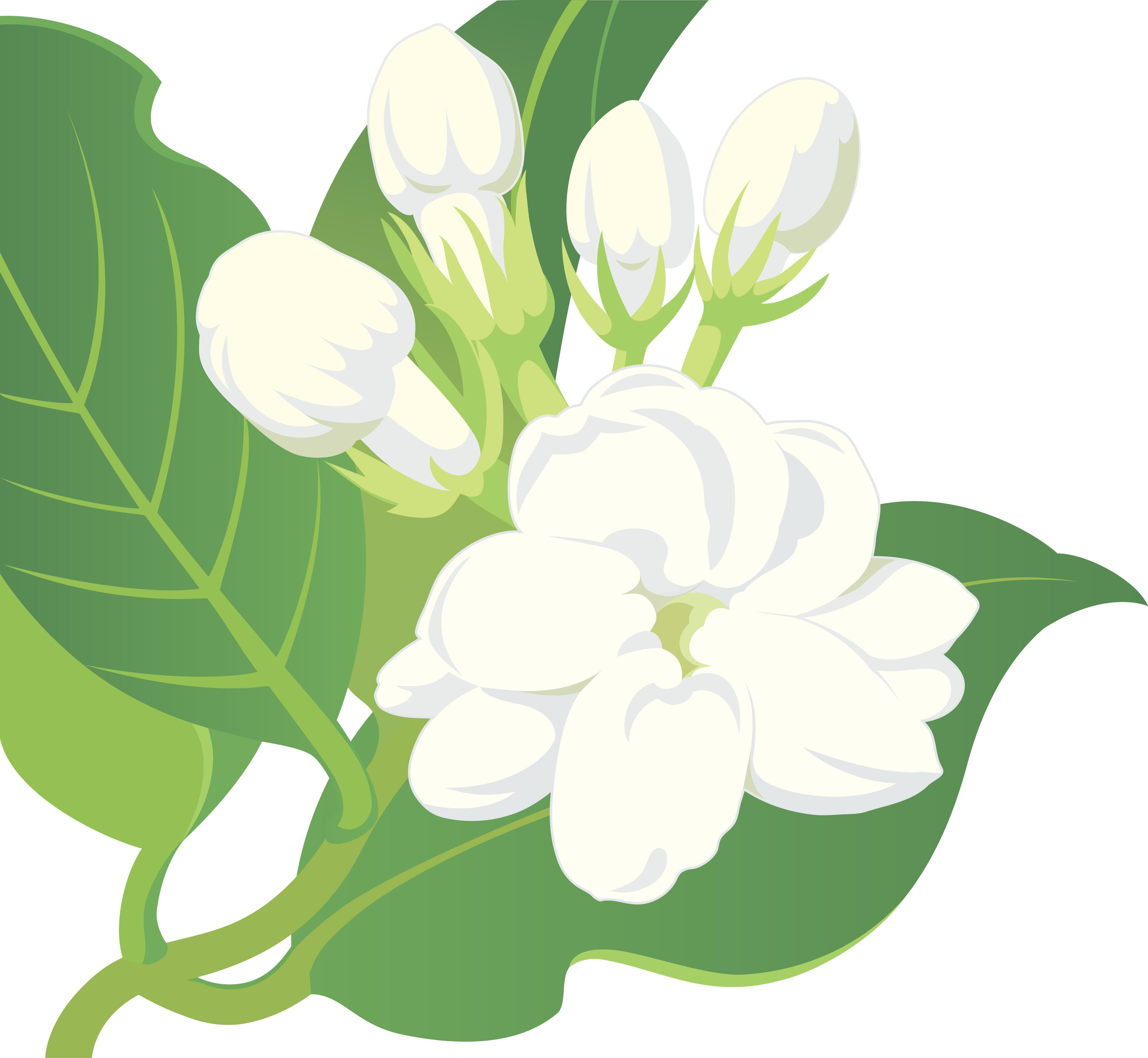 Mogra Flower PNG - 42391