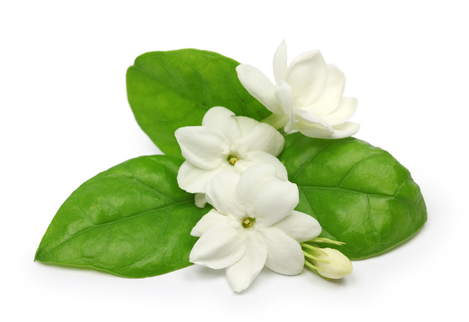 Mogra Flower PNG - 42388