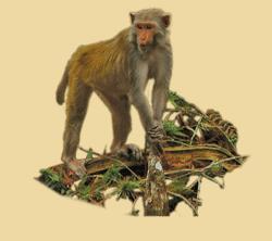Monkey PNG HD  - 121654