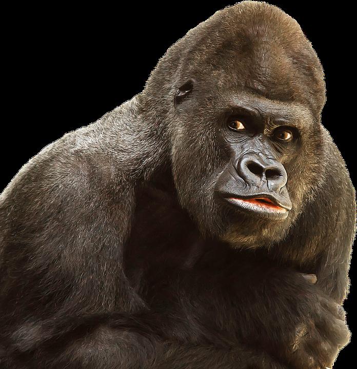 Monkey PNG HD  - 121656