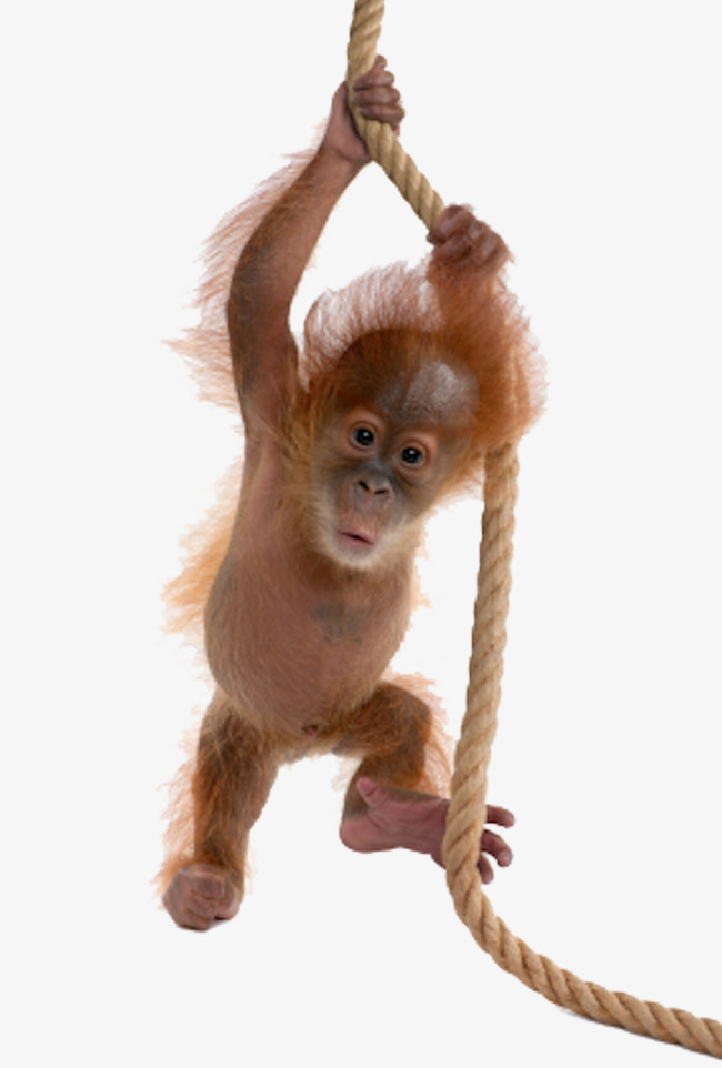 Monkey PNG HD  - 121660