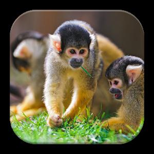 Monkey PNG HD  - 121659