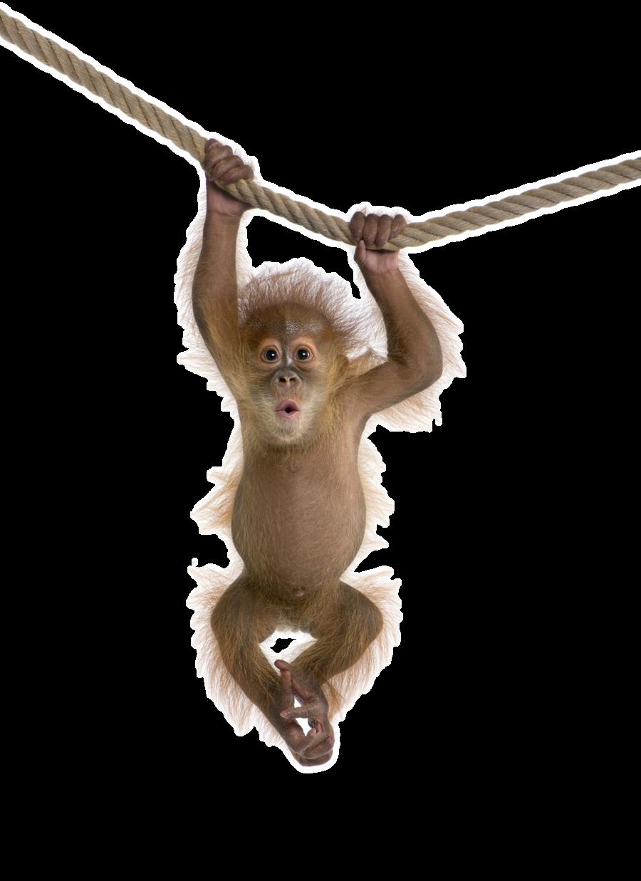 Monkey PNG HD  - 121650