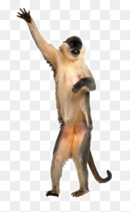 Monkey PNG HD  - 121663