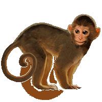 Monkey PNG HD  - 121661