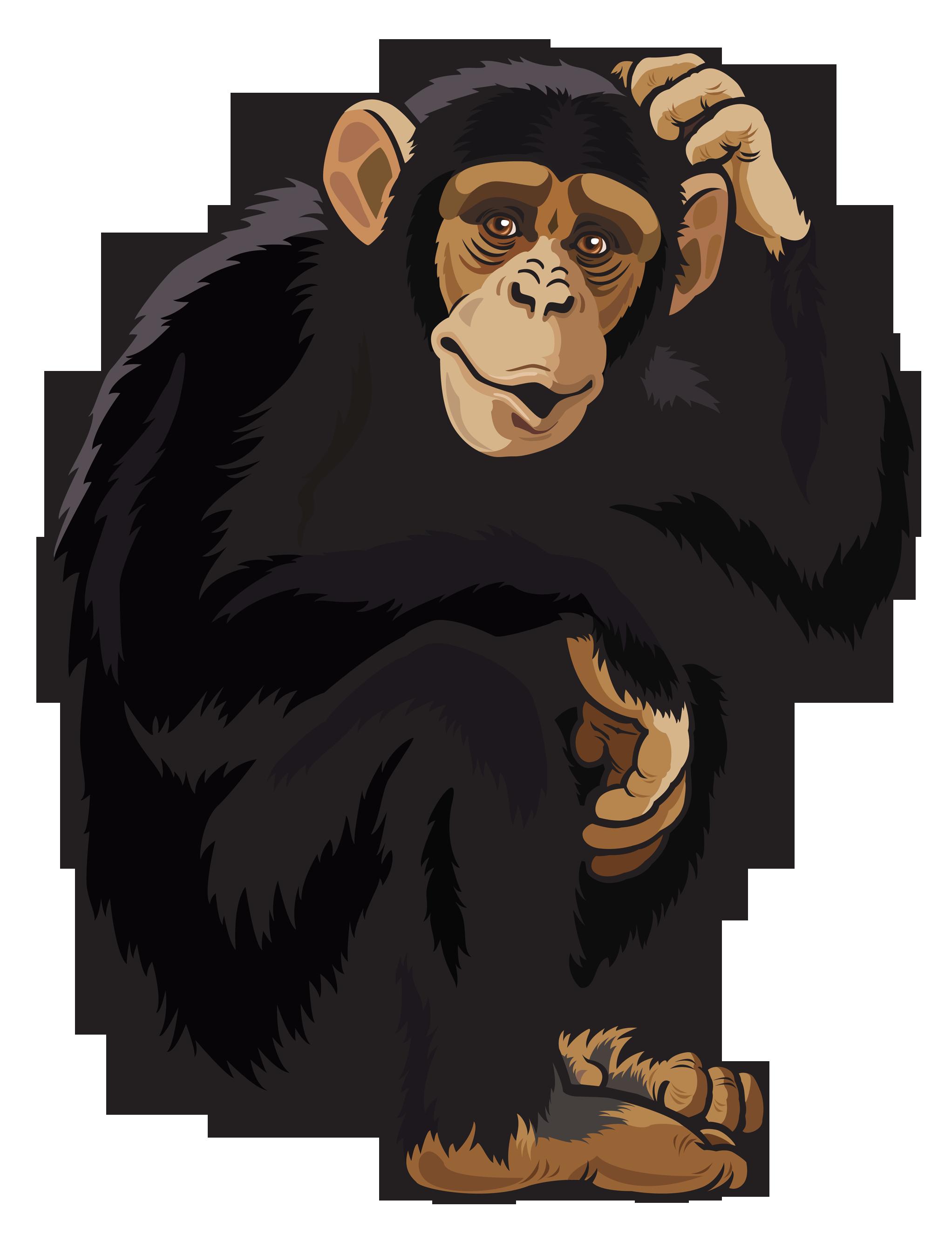 Monkey PNG HD  - 121651