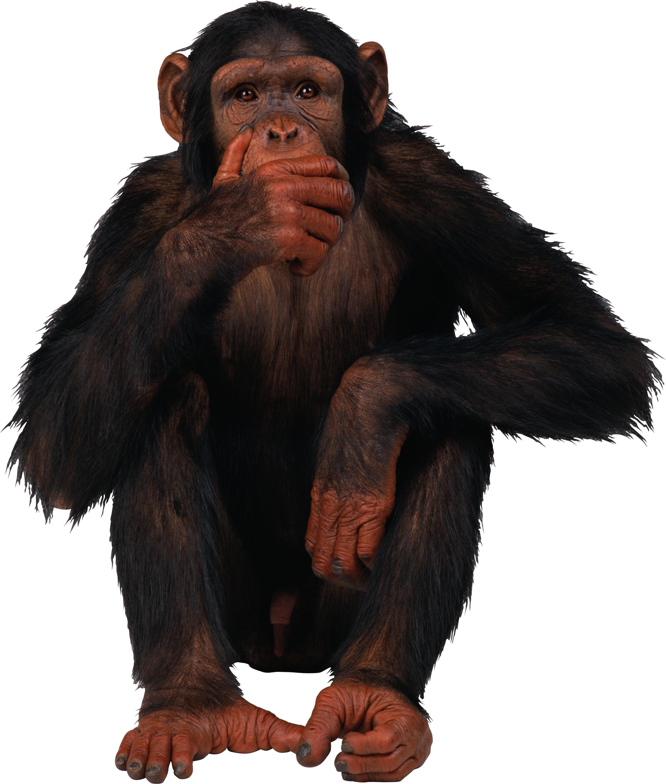 Monkey PNG HD  - 121653