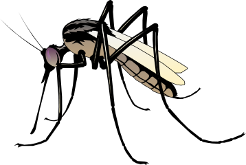 Mosquito HD PNG - 92386