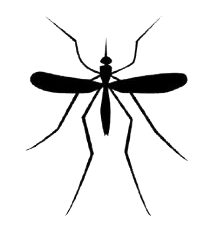 Mosquito HD PNG - 92380
