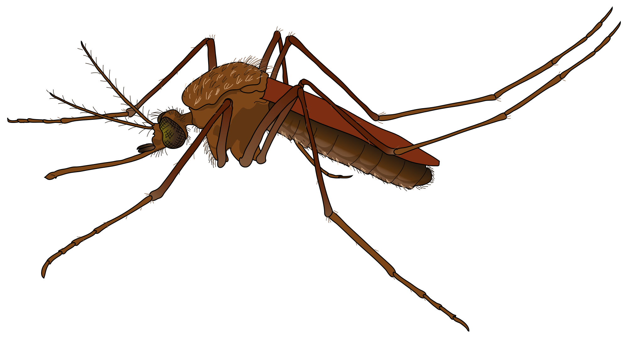 Mosquito HD PNG - 92381