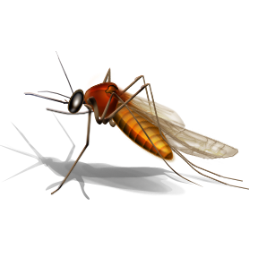Mosquito HD PNG - 92379