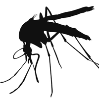 Mosquito PNG - 222