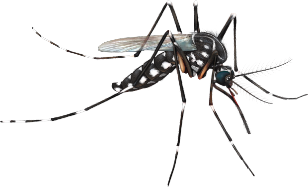 Mosquito PNG - 220