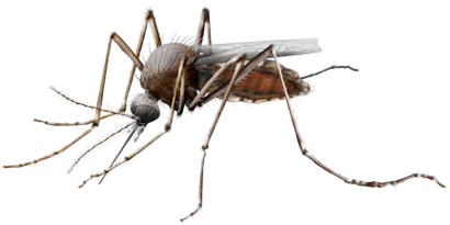 Mosquito PNG - 224