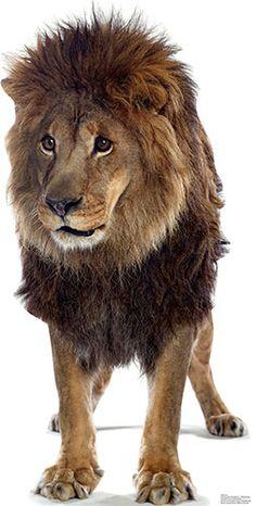 Lion - Mountain Lion PNG HD