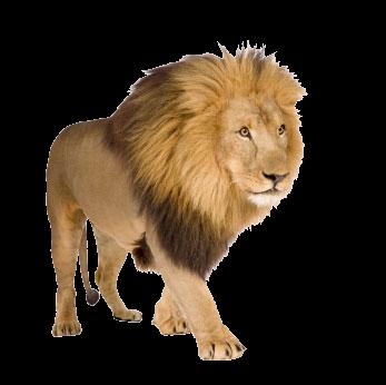 Lion · Lizard PNG - Mountain Lion PNG HD