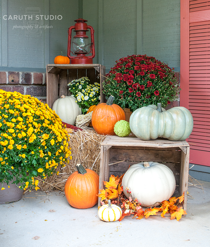 Crates and orange and white pumpkins and flowering yellow and burgandy Mums - Mums And Pumpkins PNG