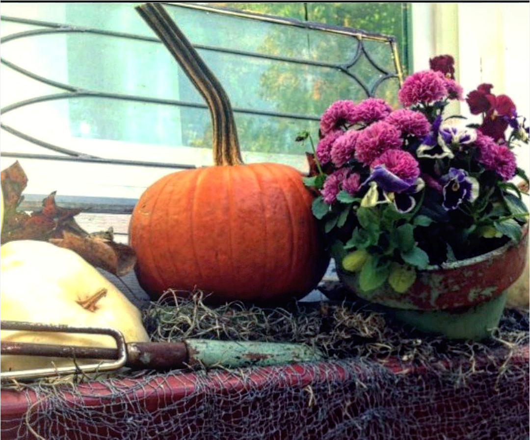 Fall container gardens mums and pansies pumpkins Beautiful fall window box  with vintage garden tools shabby - Mums And Pumpkins PNG