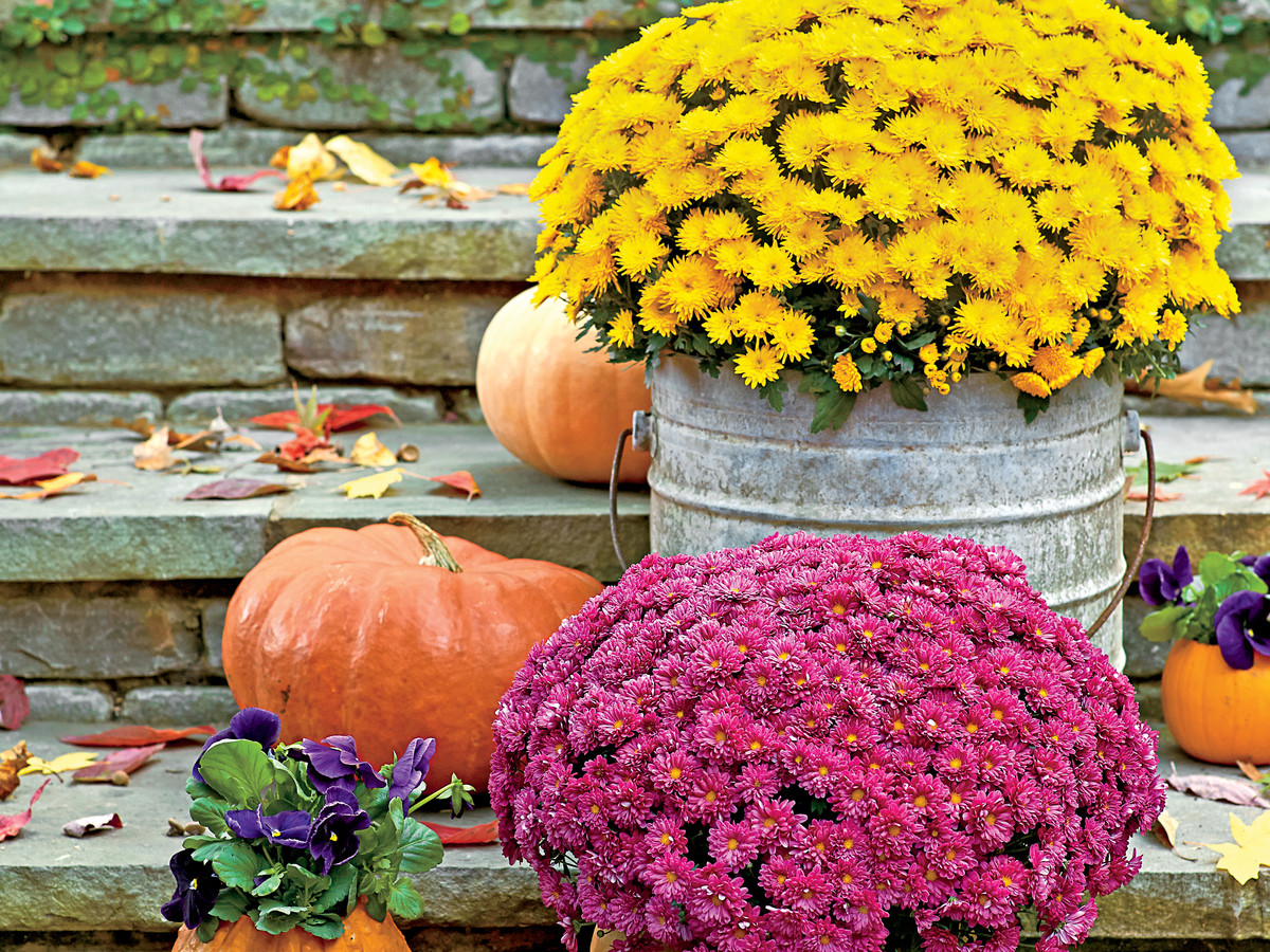 Fall Outdoor Display with Mums and Pumpkins - Mums And Pumpkins PNG