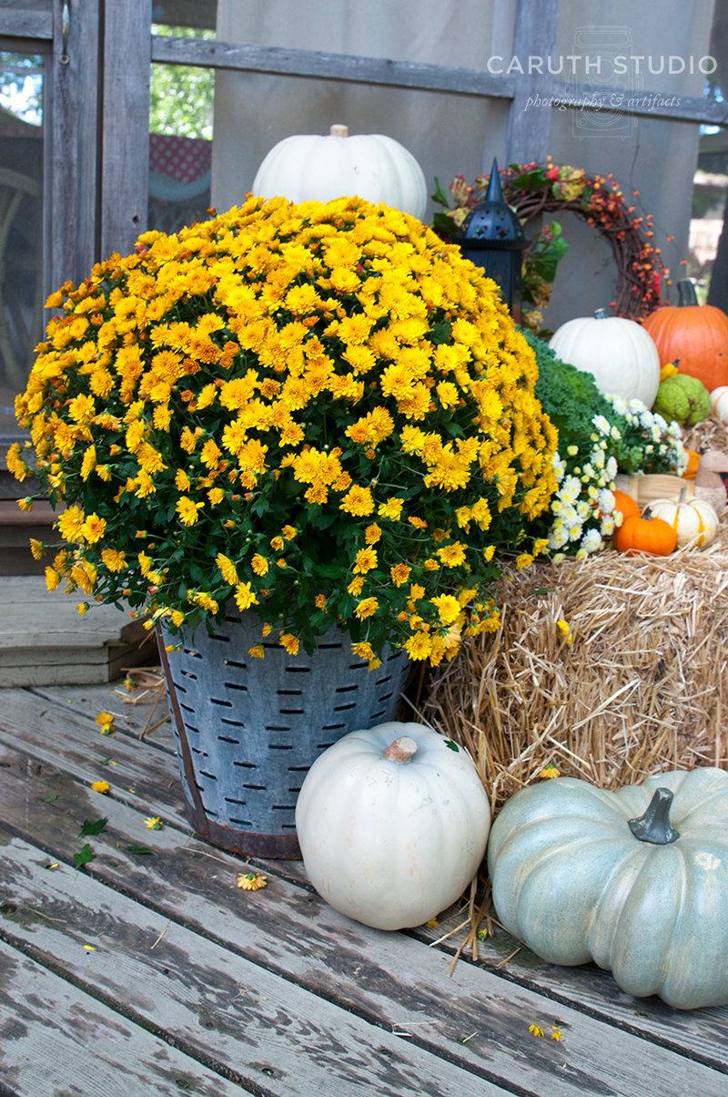 Flowering yellow Mums in olive basket - Mums And Pumpkins PNG