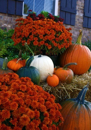 love the mums with the hay bale and pumpkins (TONS of Halloween/Fall Decor  ideas from the Thrifty Decor Chick) - Mums And Pumpkins PNG
