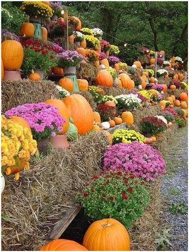 Pumpkin u0026 Mums Tiered pumpkin and mum display - Mums And Pumpkins PNG