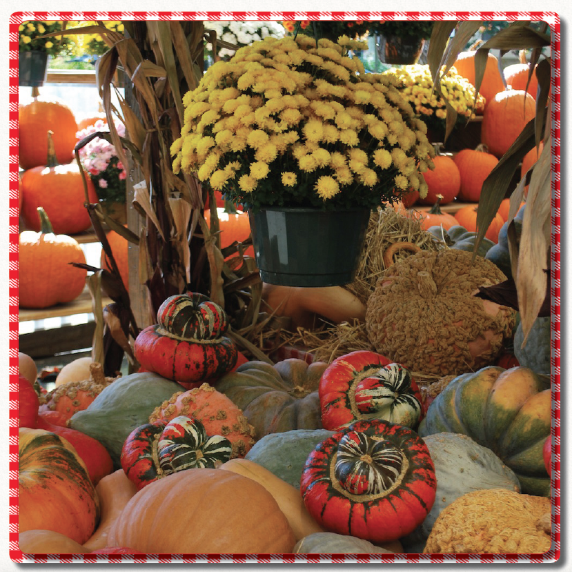Pumpkins, Gourds, Indian Corn, Straw Bales - Mums And Pumpkins PNG