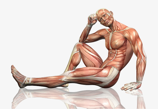 HD male body, Muscle, Body, Thinking Free PNG Image - Muscle PNG HD