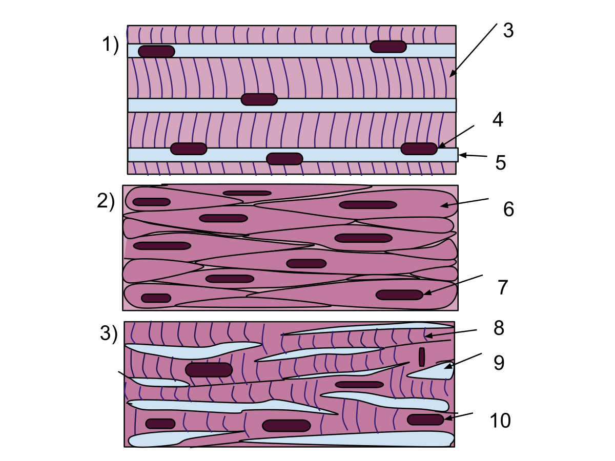 Muscle Tissue PNG - 82624