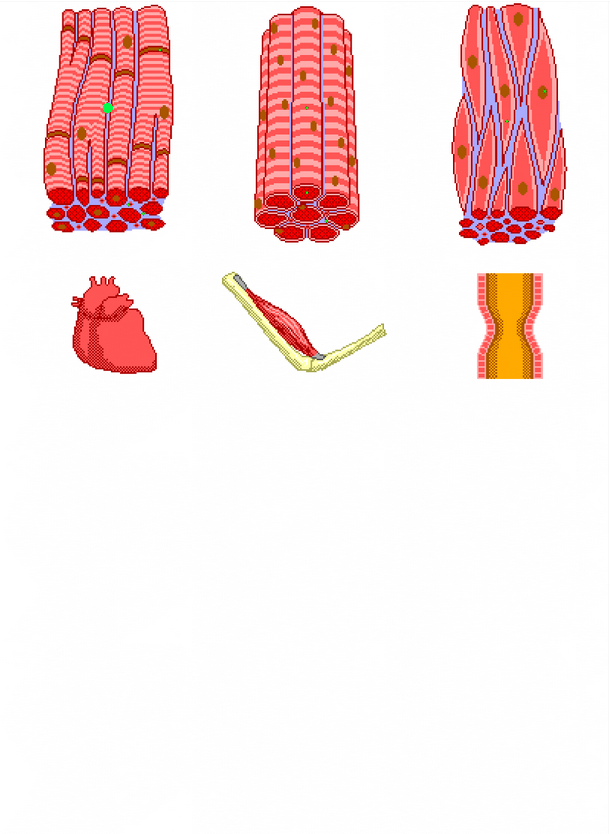 Muscle Tissue PNG - 82617