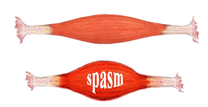 Muscle Tissue PNG - 82619