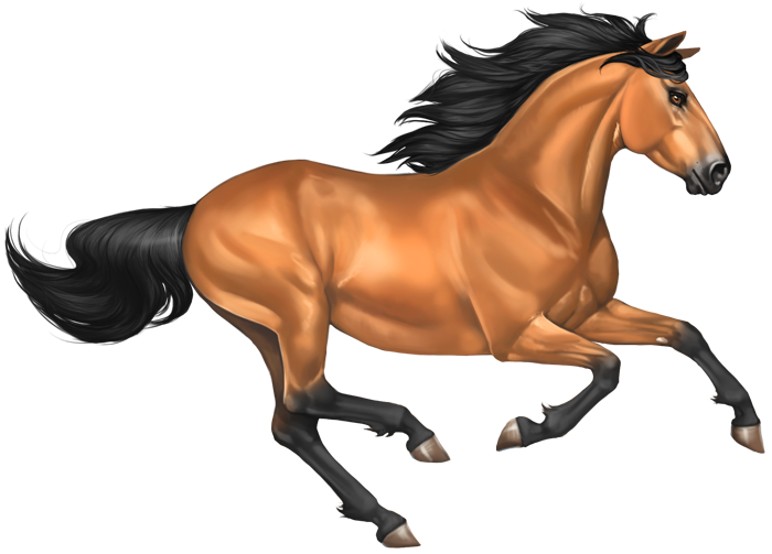 Mustang Horse PNG Image - Horse PNG