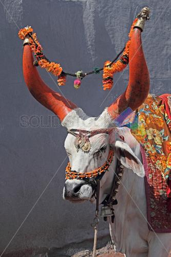 Nandi Bull PNG - 74953
