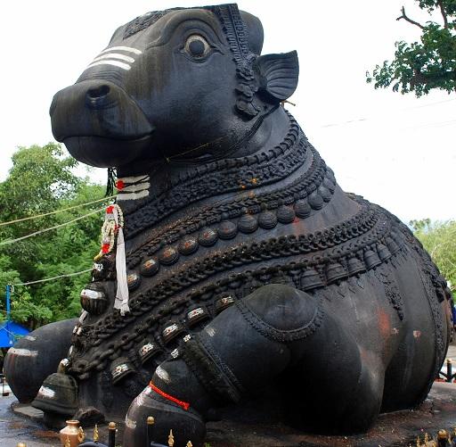 Nandi Bull PNG - 74962