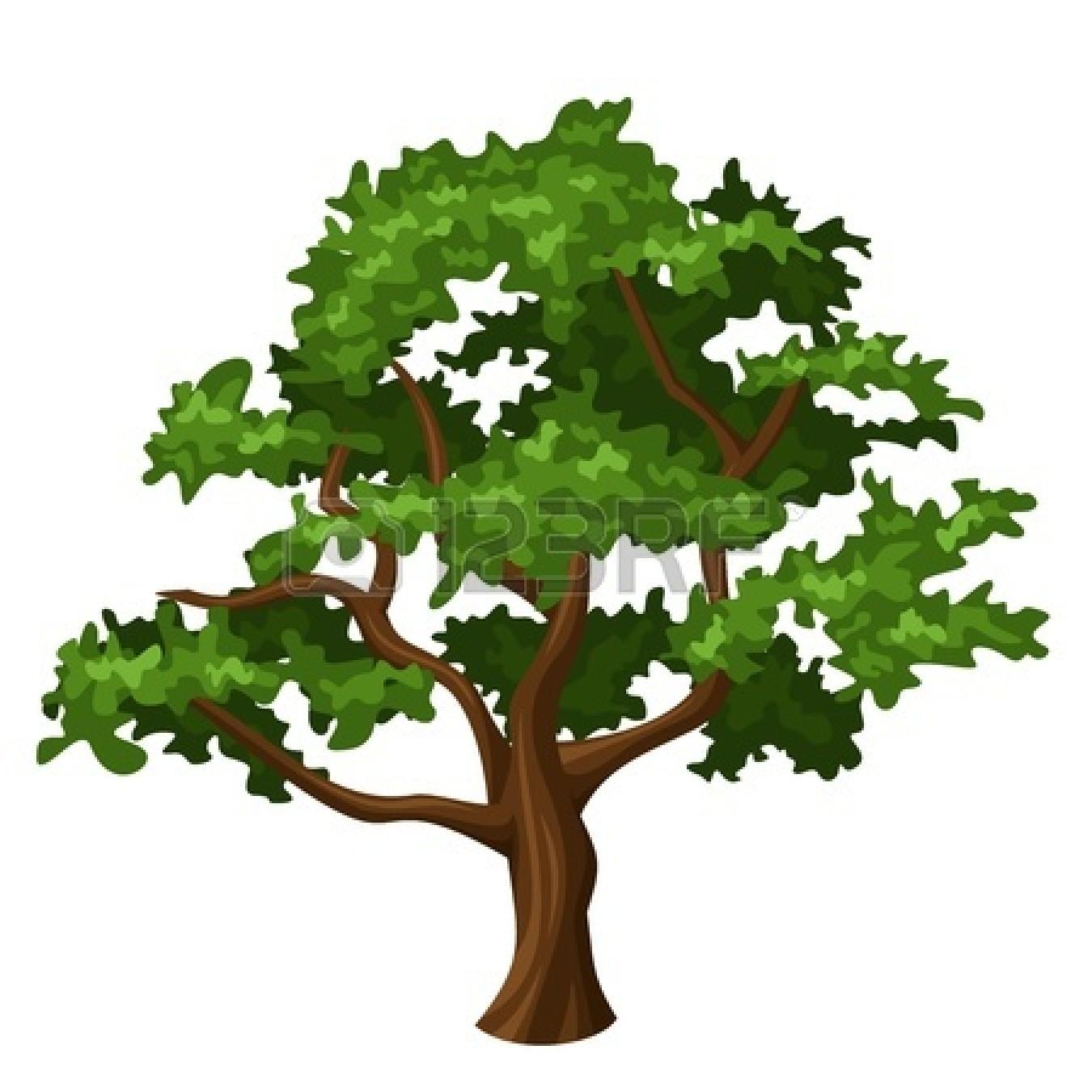 Pin Park Clipart Narra Tree #2 - Narra Tree PNG
