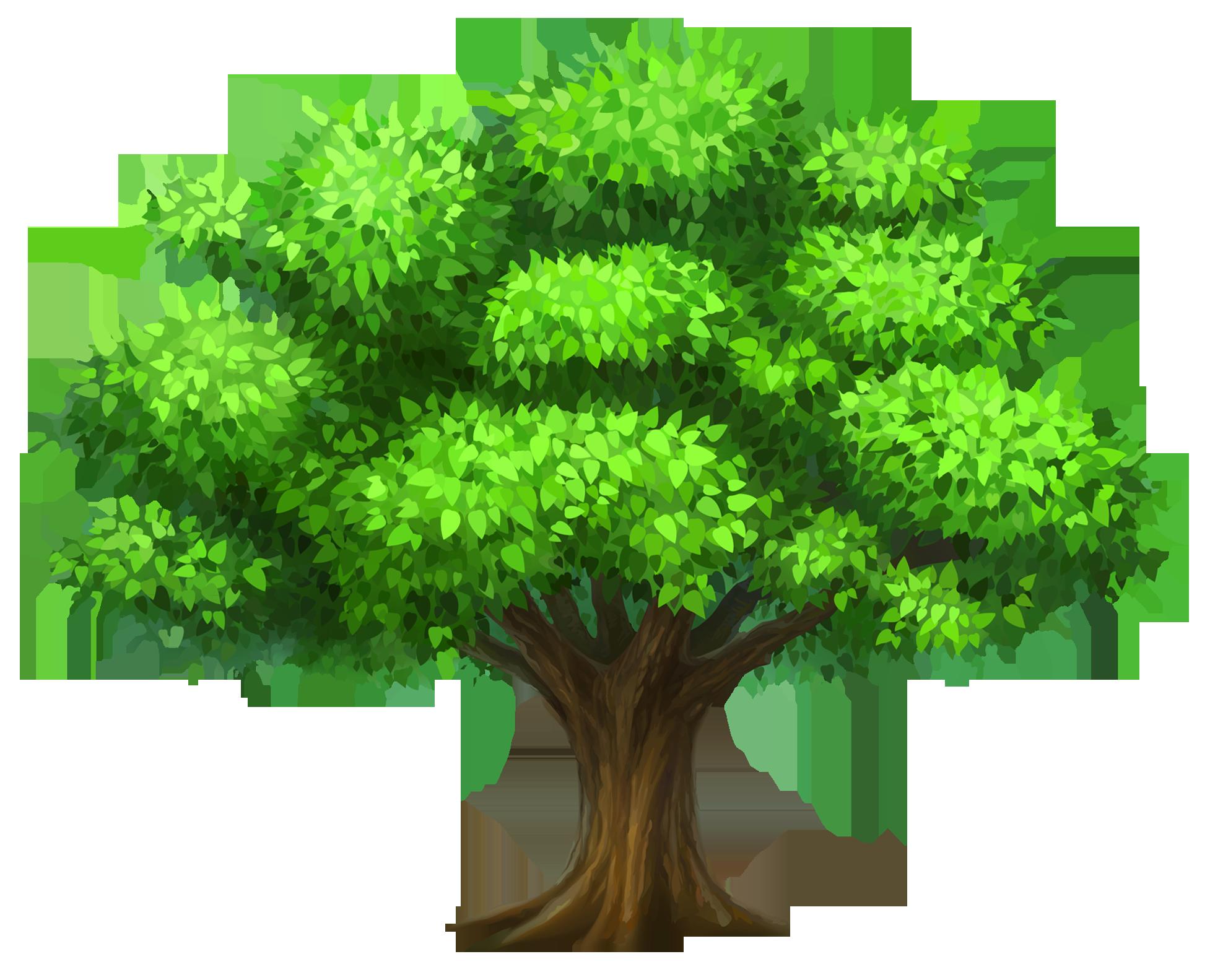 Pin Rainforest Clipart Narra Tree #6 - Narra Tree PNG