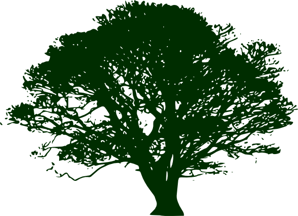 Narra Tree PNG - 74472