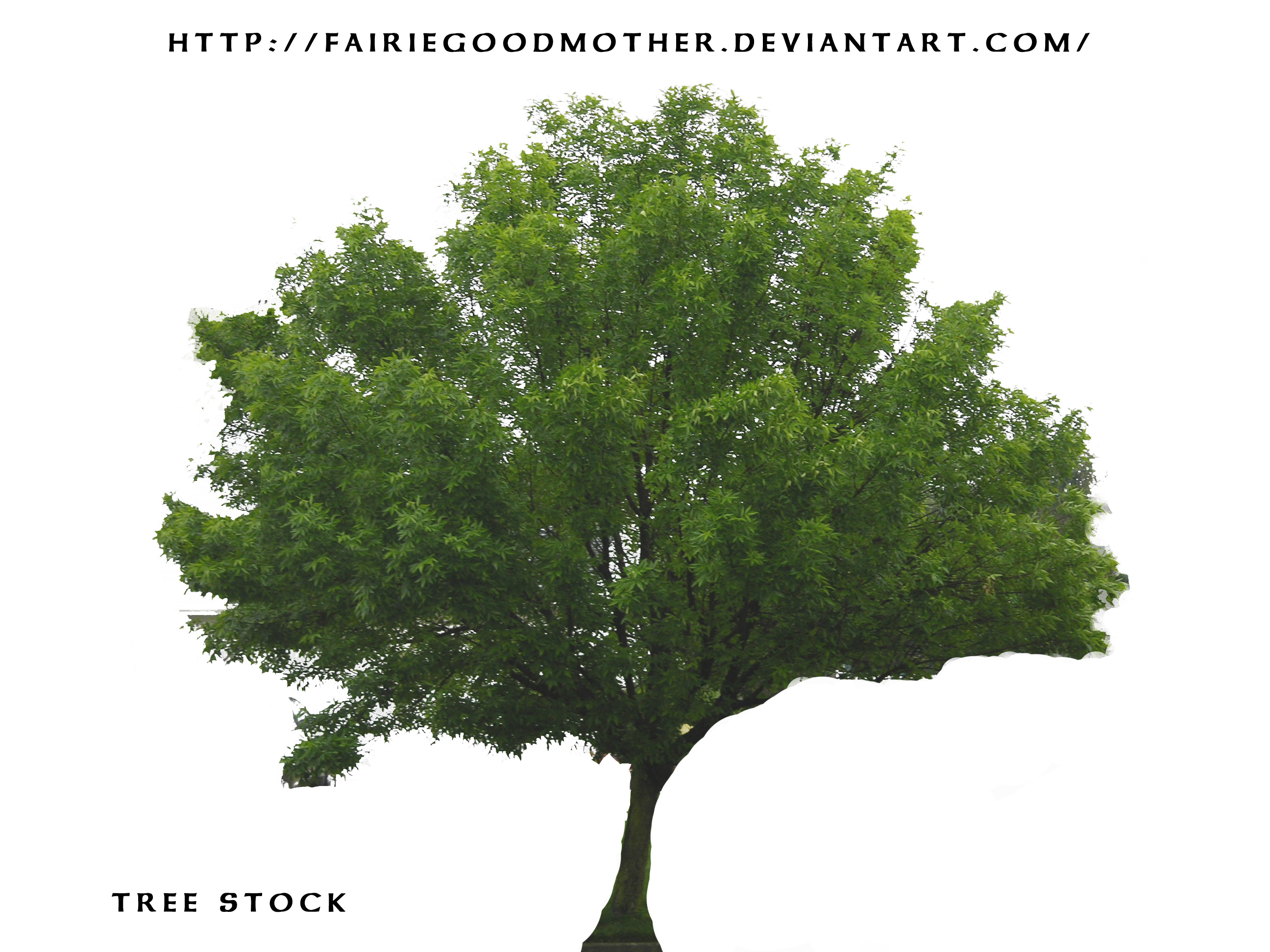 Tree Stock psd by FairieGoodMother Tree Stock psd by FairieGoodMother - Narra Tree PNG