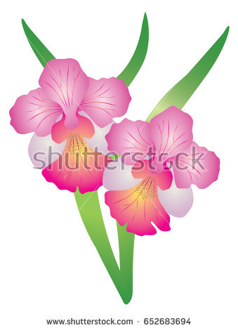 Singapore National Flower Vanda Miss Joaquim Orchid. vector Illustration - National Flower Of Singapore Vanda Miss Joaquim PNG
