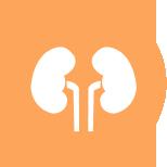 Nephrology PNG - 78304
