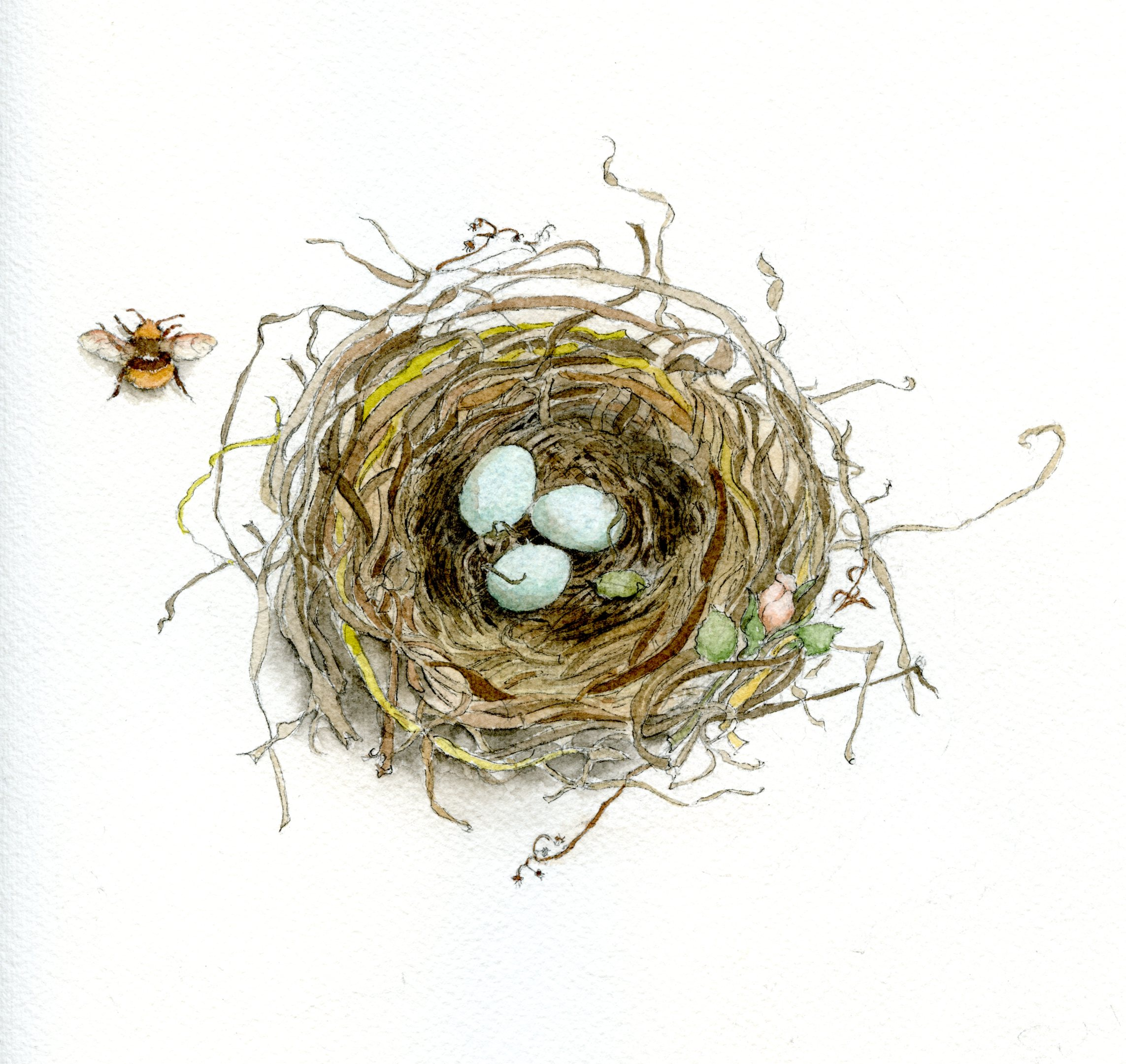 Nest Drawing PNG - 74585