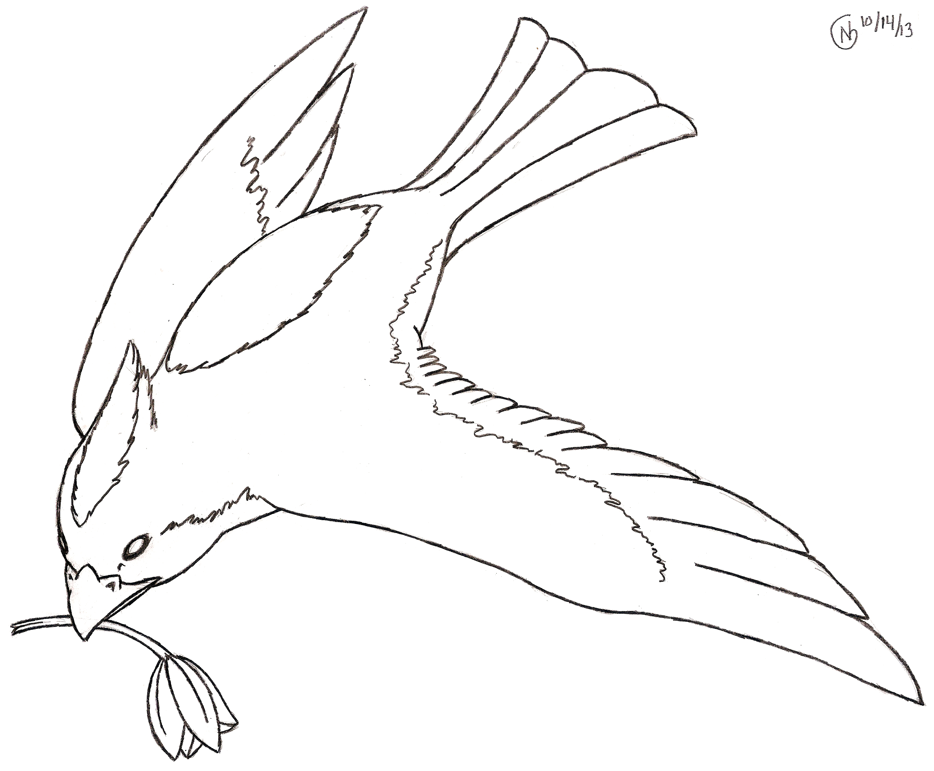 Nest Drawing PNG - 74591