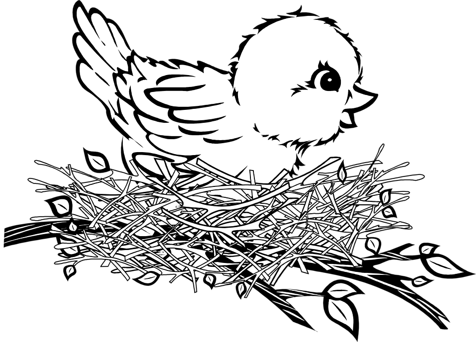 Nest Drawing PNG - 74590