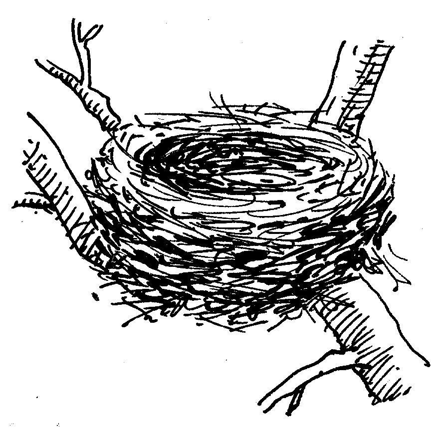 Nest Drawing PNG - 74578
