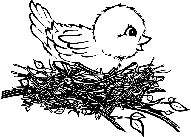 Nest Drawing PNG - 74580