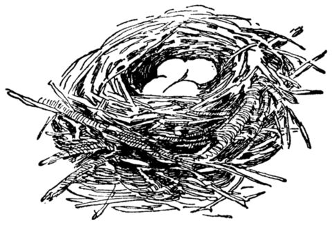 Nest Drawing PNG - 74586