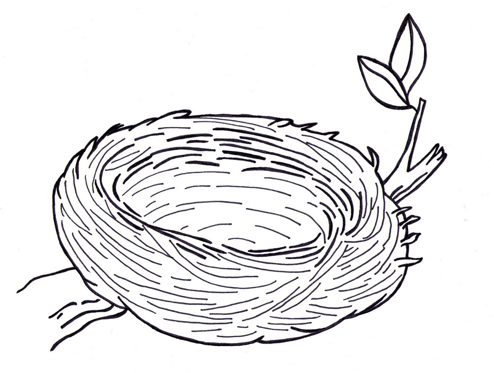 Nest Drawing PNG - 74574