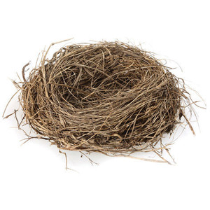 Birdu0027s Nest - Nest PNG