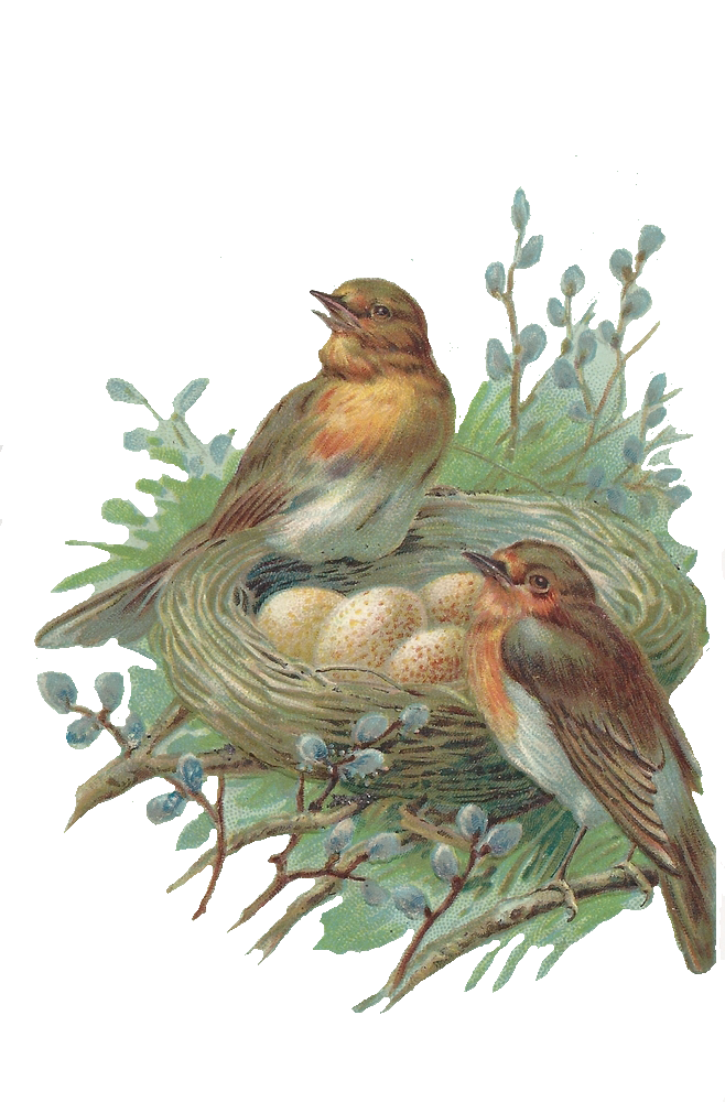 Nest PNG - 15881