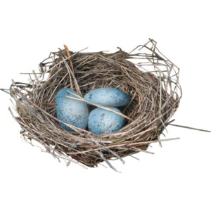 Nest PNG - 15873